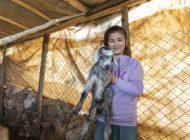 Büyükşehir'in hayvancılık projesinde doğum sevinci