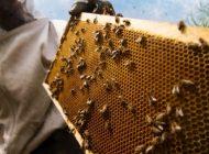 Arıcılık sektörü 2020'de dibi gördü