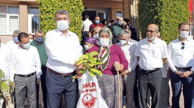 Belediye kadın üreticilere avokado fidanı dağıttı